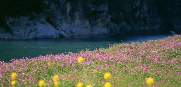 flors riu penya-segat