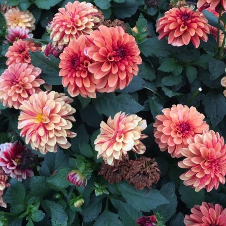Flores naranjas