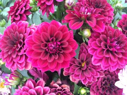 Flores granate