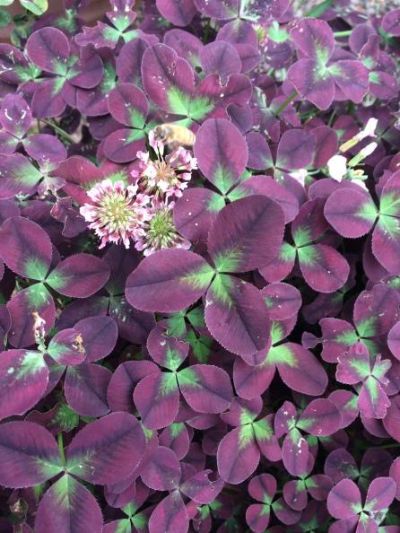 Flor multicolor rosa y hojas verdes y moradas