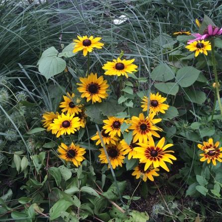 Pupurri de flores