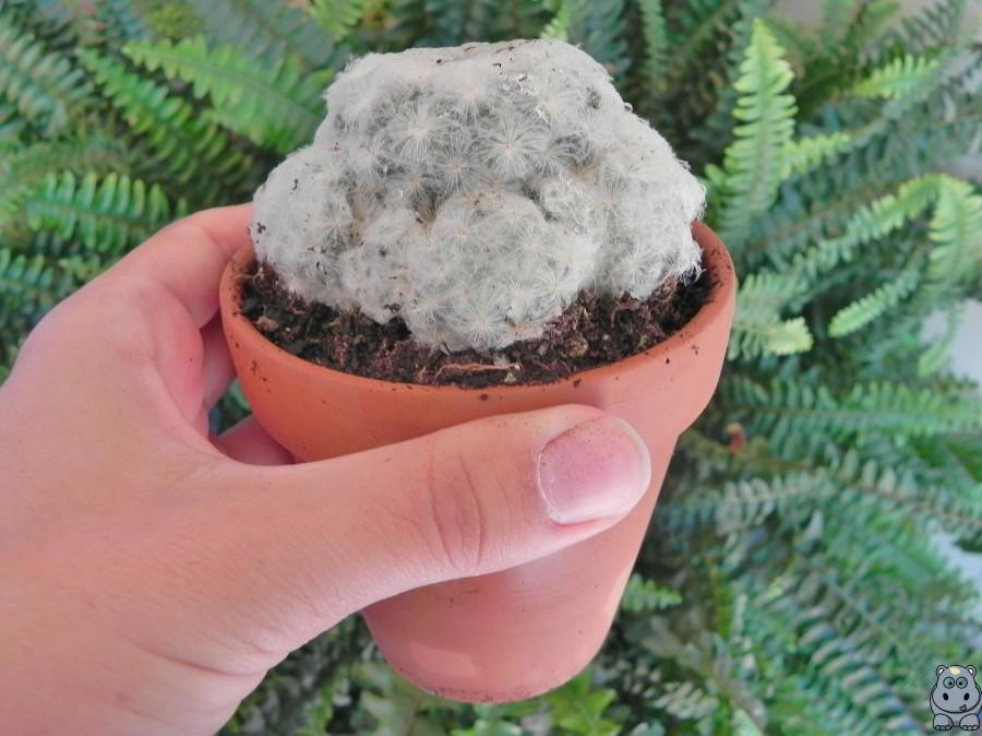 Semillas de Eywa Cactus
