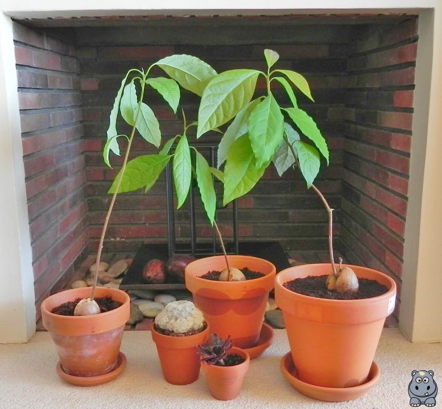 Familia Plantas